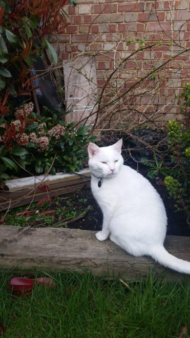 Regal Buddy in the garden.